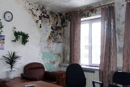 Любительское фото бетонных стен пораженных грибком из-за повышенной сырости